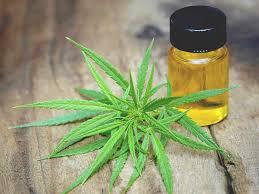 Cannabis oil - limpeza do corpo - criticas - opiniões - farmacia